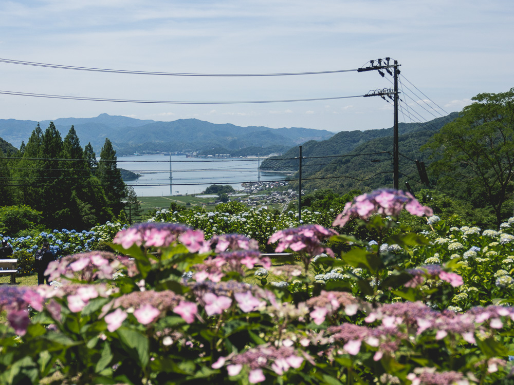 flower and view