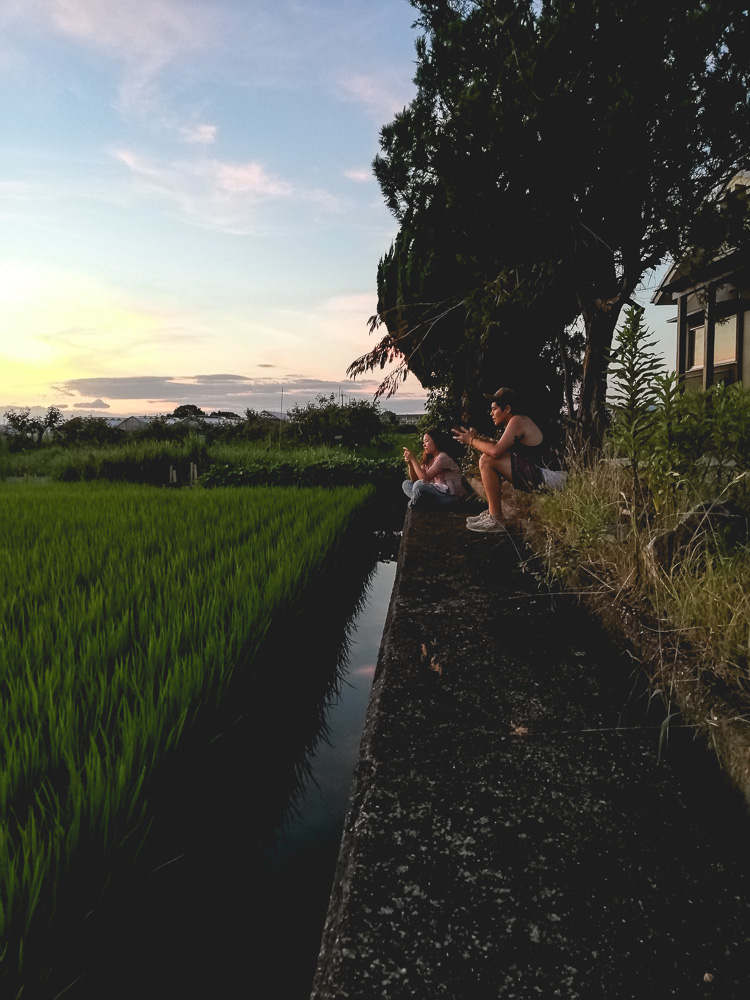 relaxing by the rice fields at dusk