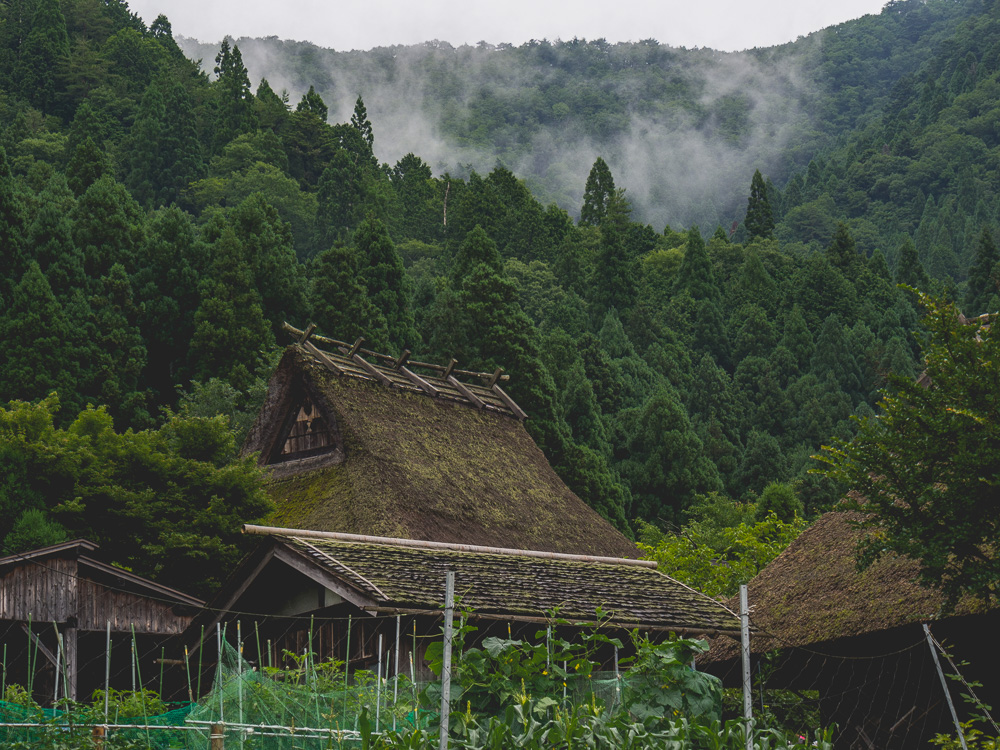 thatched roof and garden
