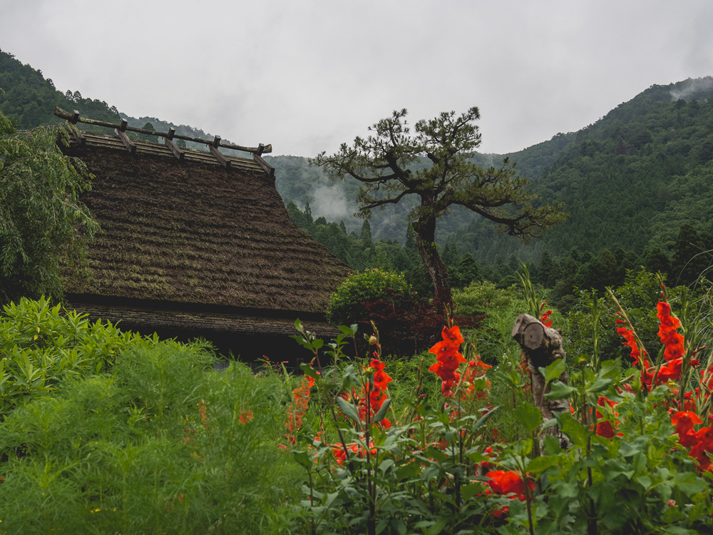 red flowers and thatched roof